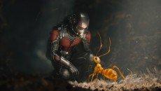 Paul Rudd is Scott Lang, aka Ant-Man. in the Marvel superhero movie directed by Peyton Reed.